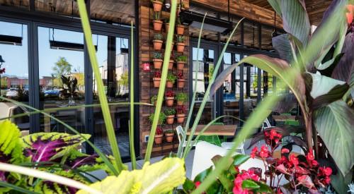 California Pizza Kitchen « Ashling   Restaurant Development and ...
